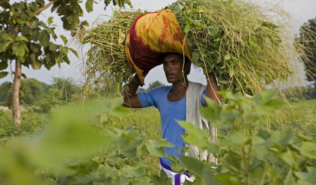 Bitter Seeds - Bittere Saat. Indische Baumwolle und das Los der Bauern und Bäuerinnen